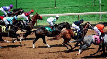 Corridas cavalos ao vivo Bet365